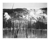 Barren trunks in water near steam rising from mountains, Roaring Mountain, Yellowstone National Par Posters av Ansel Adams