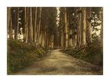View of Imaichi Kunst von Unknown 19th Century Japanese Photographer