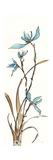 Spring Orchids I on White Plakater af Chris Paschke