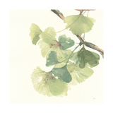 Gingko Leaves II Light Premium Giclee Print by Chris Paschke
