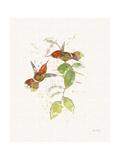 Colorful Hummingbirds II Poster av Katie Pertiet