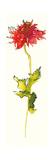 Peony Form Poppies III Prints by Shirley Novak