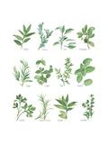 Herb Chart Pósters por Chris Paschke