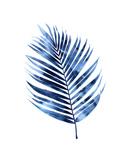 Indigo Palm I Giclée-tryk af Melonie Miller