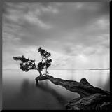 L'arbre et l'eau Affiche montée sur bois par Moises Levy