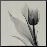 Tulipe Affiche montée sur bois par Marianne Haas