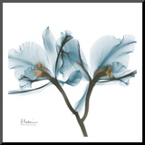 Orchids in Blue Mounted Print by Albert Koetsier