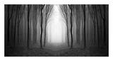 Dark Woods Pôsters por  PhotoINC Studio