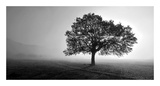 Tree in Mist Plakater af  PhotoINC Studio