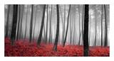 Autumn Woods Posters av  PhotoINC Studio