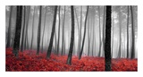 Herbstlicher Wald Kunstdrucke von  PhotoINC Studio