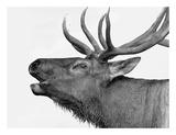 Deer Posters by  PhotoINC Studio