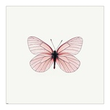 Pink Butterfly Posters by  PhotoINC Studio
