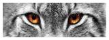 Lynx Posters van  PhotoINC Studio