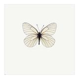 White Butterfly Prints by  PhotoINC Studio
