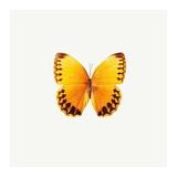 Yellow Butterfly Print by  PhotoINC Studio