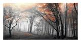 Herbstlicher Wald Poster von  PhotoINC Studio