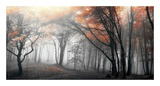Autumn Woods Posters by  PhotoINC Studio