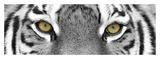 Tiger Affiches van  PhotoINC Studio
