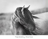 Graça Feroz Pôsters por Tony Stromberg