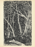 Sous-Bois Samlarprint av Andre Derain