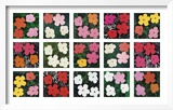 Flowers (various), 1964 - 1970 Prints by Andy Warhol