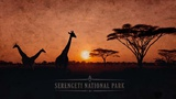 Vintage Sunset with Giraffes in Serengeti National Park, Africa Plakater af  Take Me Away