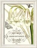 Jardin Botanique II Lámina giclée enmarcada por  Vision Studio