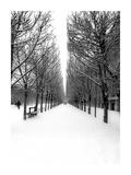 The Tuileries Garden under the snow, Paris Giclee Print by Michel Setboun