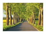 Lime tree alley, Mecklenburg Lake District, Germany Giclée-Druck von Frank Krahmer
