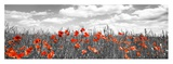 Poppies in corn field, Bavaria, Germany Giclée-Druck von Frank Krahmer