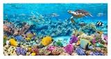 Sea Turtle and fish, Maldivian Coral Reef Giclée-Druck von  Pangea Images