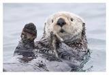 Yesterday I Caught A Fish Thiiis Big! Otter. Alaska Giclée-tryk af Roman Golubenko