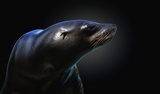 Seal Print on Canvas by Pedro Jarque