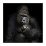 IMHO Giclee Print by Antje Wenner-Braun