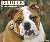 Just Bulldogs  - 2018 Boxed Calendar Kalenders