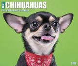 Just Chihuahuas  - 2018 Boxed Calendar Kalenders