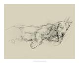 Dog Days III Gicléedruk van Ethan Harper