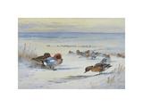 Widgeon in The Snow Giclée-Premiumdruck von Archibald Thorburn