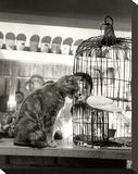 Child, Cat and Dove Trykk på strukket lerret av Robert Doisneau