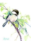 Chickadee Prints by Suren Nersisyan