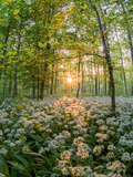 Floral Forest Scene Prints by  Grab My Art