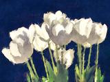 Sunlit Tulips Art by Noah Bay