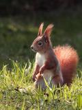 Cute Squirrel Mammal Pósters por  Grab My Art