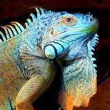 Exotic Reptile Reproduction procédé giclée par  Wonderful Dream