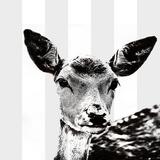 Deer Black And White - Square Art by  Lebens Art
