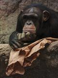 Thoughtful Chimpanzee Pósters por  Lebens Art