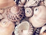 Sea Shells Plakater av  Lebens Art