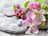 Fleur de pommier Reproduction procédé giclée par  Lebens Art