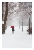 Winter Rose Poster von Stefano Corso